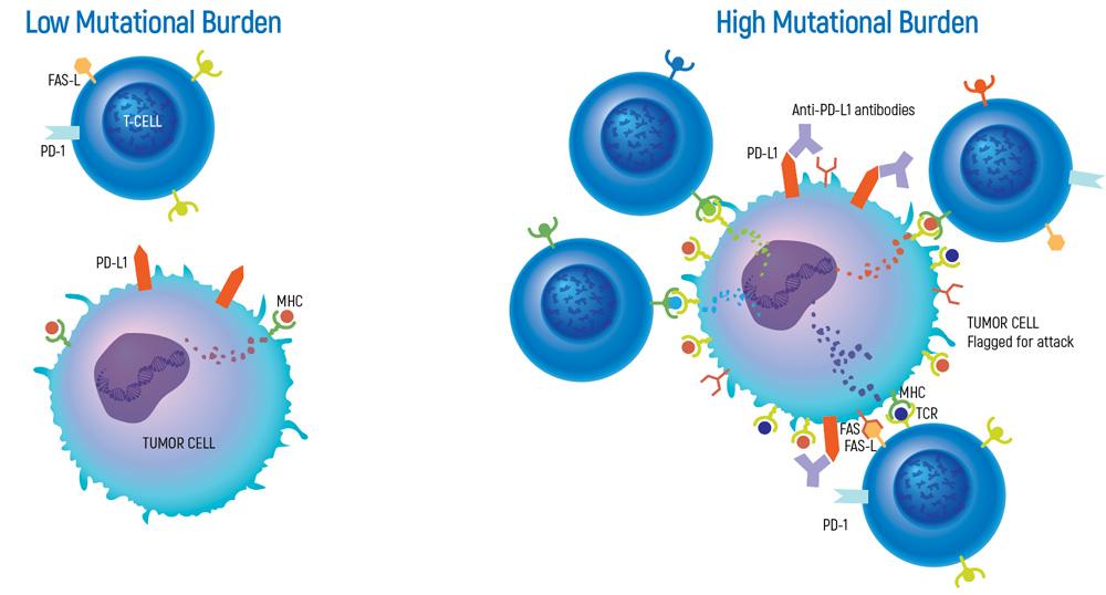 onkogenetiks-low-and-high-mutational-burden